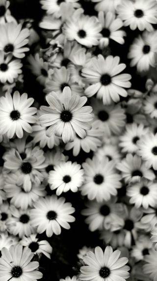 Обои на телефон готические, черные, цветы, темные, старые, винтаж, белые, fashioned