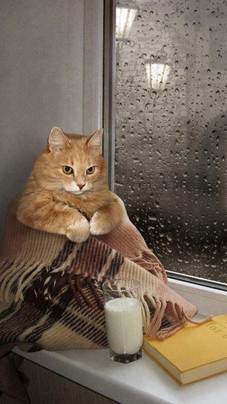 Обои на телефон окно, оранжевые, кошки, cat in the window