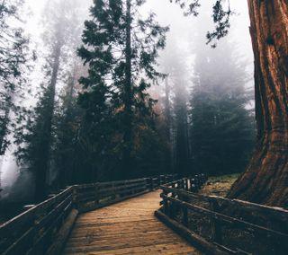 Обои на телефон путь, пейзаж, лес, дорога