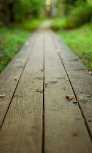 Обои на телефон парк, путь, прогулка, лес, дерево, bature