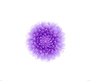 Обои на телефон лотус, цветы, цветные, фиолетовые, розовые, прекрасные, белые