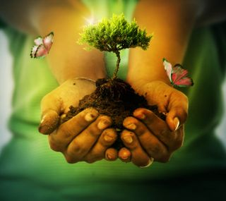 Обои на телефон руки, природа, земля, дерево, hands of earth