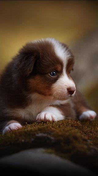 Обои на телефон щенки, icio, cane puppy