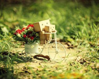 Обои на телефон любовники, цветы, романтика, розы, милые, любовь, love, danboard lovers