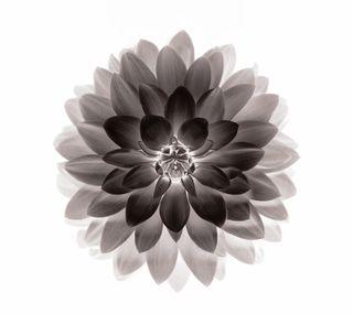 Обои на телефон лотус, wrt, pytw, negative lotus
