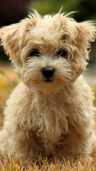 Обои на телефон щенки, собаки, питомцы, милые, белые