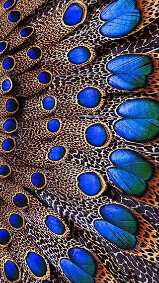 Обои на телефон перья, синие, птицы, перо, blue feathers