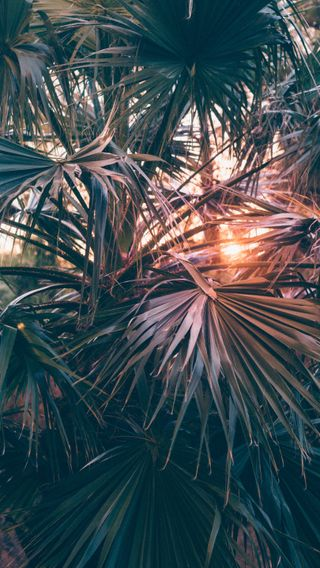 Обои на телефон природа, пляж, пальмы, океан, деревья