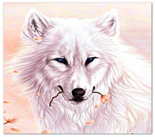 Обои на телефон волк, белые, white   wolf