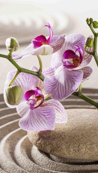 Обои на телефон дзен, цветы, спа, растения, природа, песок, орхидея, камни, zen stones, orchid and zen stone
