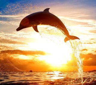Обои на телефон волны, солнце, новый, море, дельфины, sun set, hd