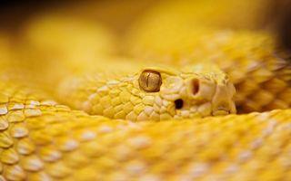 Обои на телефон змея, животные, желтые, глаза, rattle