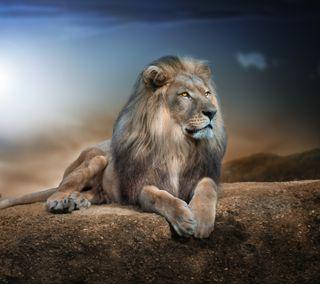 Обои на телефон love, king lion, любовь, классные, лев, король