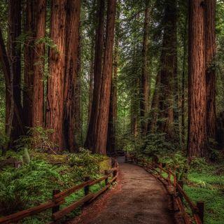 Обои на телефон путь, природа, лес, дорога, дерево