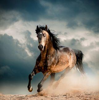 Обои на телефон сильный, тема, стена, снег, лошадь, лошади, звезда, единорог, дикие, арт, wild horse r star, west, art