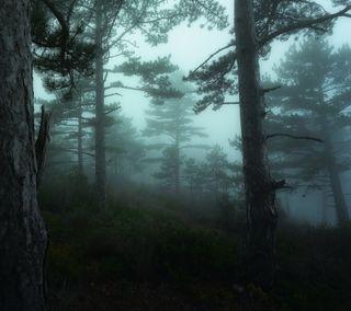 Обои на телефон туманные, лес