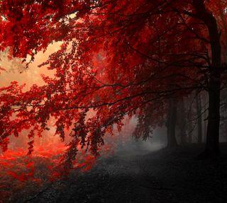 Обои на телефон природа, пейзаж, красные, rbol