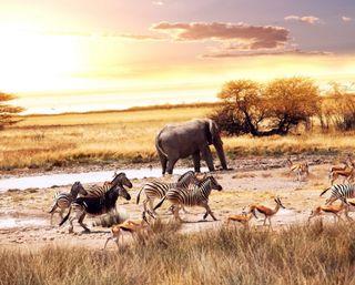 Обои на телефон слон, пустыня, зебра, животные, восход, африка