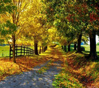 Обои на телефон парк, путь, приятные, природа, взгляд, park nature path