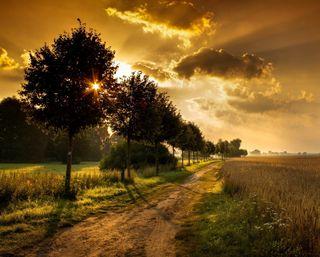Обои на телефон солнечный свет, поле, деревья, восход, sunrise fields