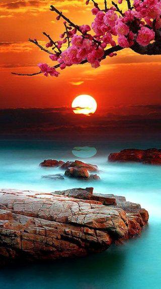 Обои на телефон озеро, солнце, природа, лето, закат