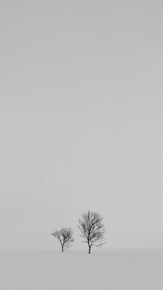 Обои на телефон trees in the snow, природа, крутые, белые, зима, снег, дерево, деревья, черно белые