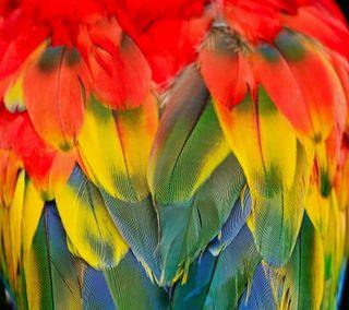 Обои на телефон попугай, птицы, перья, красочные, абстрактные, scarlett macaw, scarlet macaw