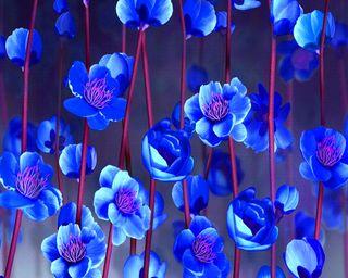 Обои на телефон сакура, цветы, синие, sakura flowers, blue sakura flowers