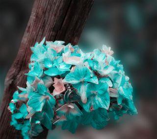 Обои на телефон растения, цветы, флора, природа, прекрасные, любовь, естественные, дерево, love, flowers on wood