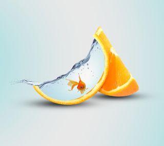 Обои на телефон slice, вода, оранжевые, рыба, фрукты