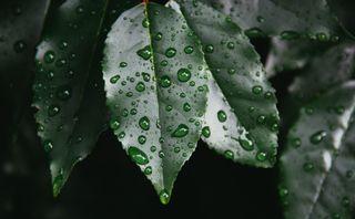 Обои на телефон фото, природа, прекрасные, мокрые, листья, wet leaves