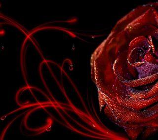 Обои на телефон цветочные, роса, розы, бриллиант