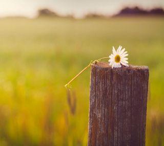 Обои на телефон цветы, страна, прекрасные, зеленые, дерево, боке, белые, sreefu, lomo, flower on stump