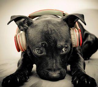 Обои на телефон собаки, наушники, забавные, животные, другие, wearing headphone