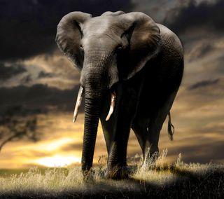 Обои на телефон слон, ls, hf