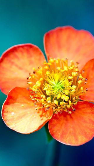 Обои на телефон цветы, макро, s7, qhd, 2560, 1440