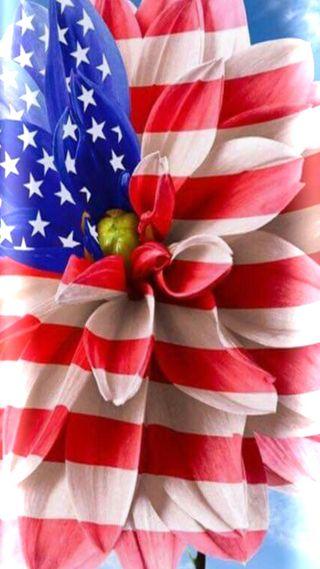 Обои на телефон фейерверк, цветы, флаг, праздник, патриотический, июль, 4е