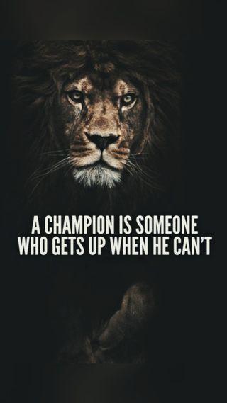 Обои на телефон цитата, мотивация, лев, король, зверь, белые, piece, one, motivation quotes, mode