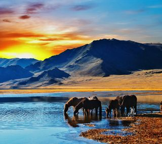 Обои на телефон лошади, природа, пейзаж, озеро, закат, животные, горы, восход