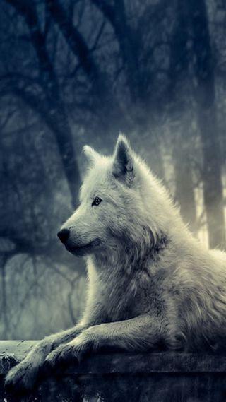 Обои на телефон животные, волк, белые