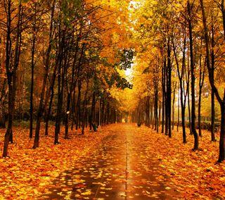 Обои на телефон сезон, оранжевые, пейзаж, осень, лес, желтые