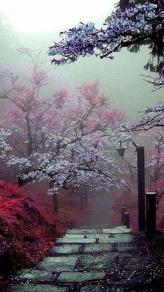 Обои на телефон синие, красые, розовые, цветные, сад, небеса