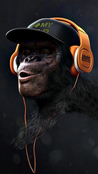 Обои на телефон слышать, обезьяны, swag, not hear, monkey swag hear