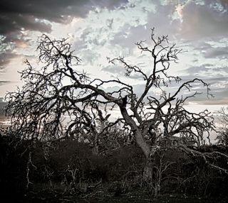 Обои на телефон ужасные, жуткие, дерево, hdr, creepy tree