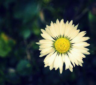 Обои на телефон макро, цветы, природа