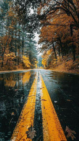 Обои на телефон фотографии, природа, осень, дорога, fall nature, autumn pictures