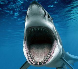 Обои на телефон акула, цветные, фото, природа, пейзаж