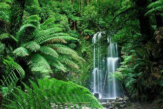 Обои на телефон джунгли, водопад