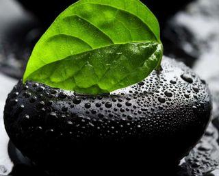 Обои на телефон капли дождя, черные, рок, мокрые, листья, камни, дождь, вода, rain and leaf