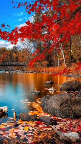 Обои на телефон красота, природа, прекрасные, пейзаж, осень, красые